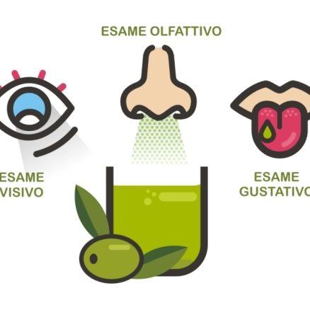 Corso assaggio dell'olio esame olfattivo, visivo, gustativo