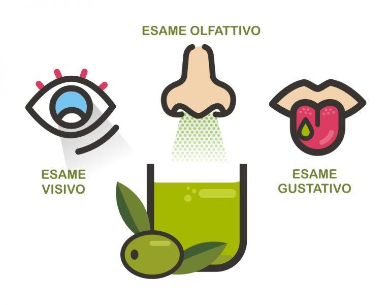 5 Sensi Esame olfattivo, visivo, gustativo